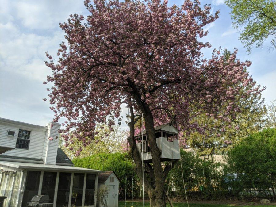 Spring has sprung in Nanuet.